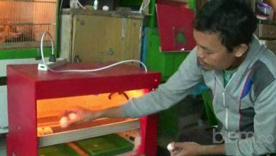 Photo of Dengan Mesin Penetas Telur Ciptaannya, Turmudi Tak Lagi Cemas Kena PHK