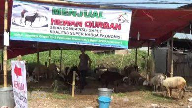 Photo of Jelang Idul Adha Penjualan Hewan Kurban Meningkat