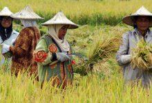 "Photo of Aliansi Mahasiswa Pertanian Indonesia: ""Hentikan Drama Elit Politik dalam Pagelaran Pertanian Nasional"""
