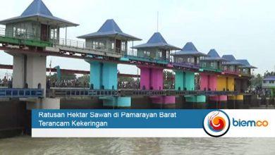 Photo of Ratusan Hektar Lahan Pertanian di Kabupaten Serang Terancam Kekeringan