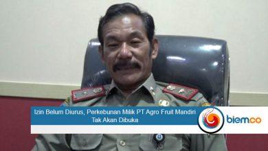 Photo of Izin Belum Diurus, Perkebunan Milik PT Agro Fruit Mandiri Tak Akan Dibuka