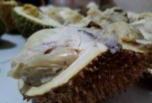 Photo of Fakta Durian Tidak Mengandung Kolesterol