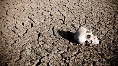 Photo of Skriptoria: Bumi di Ambang Kepunahan Massal, dan Kita Masih Sibuk Bertikai