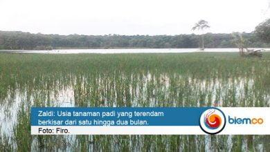 Photo of Dinas Pertanian Sebut Ratusan Hektar Sawah Terendam Banjir