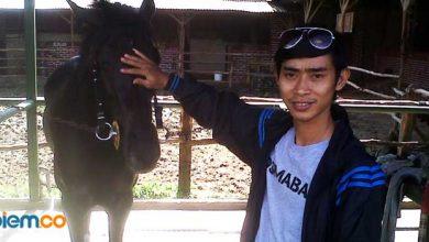 Photo of Benarkah Kuda Menyimpan Memori Emosi Manusia?