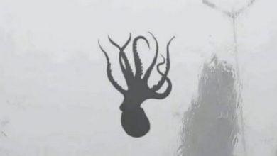 Photo of Badai Sebabkan Beberapa Hewan Laut di Pesisir China Pindah ke Darat