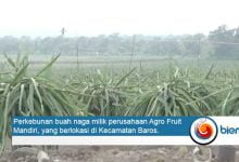 Agro Fruit Mandiri