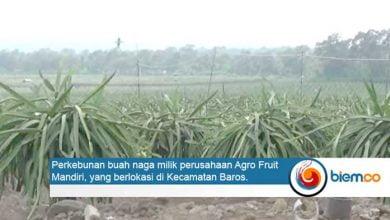 Agro Fruit Mandiri