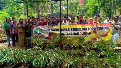 Photo of Distan Provinsi Banten Gelar Workshop Penerapan Inovasi Teknologi Topworking pada Tanaman Durian