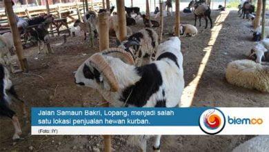 Photo of Jelang Idul Adha, Penjual Hewan Kurban di Kota Serang Mulai Banyak