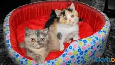 Photo of Jangan Salah Paham, Ini Alasan Kenapa Kucing Mengeong pada Anda