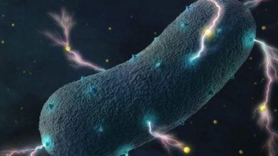 bakteri listrik