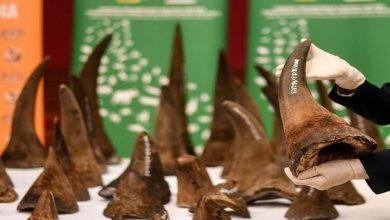 Photo of Cina Kembali Legalkan Cula Badak dan Tulang Harimau untuk Pengobatan