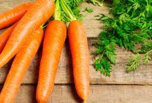 wortel untuk bangunan