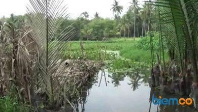 Photo of Pandji Tirtayasa Sebut Revitalisasi Kalimati Tunggu DED Selesai