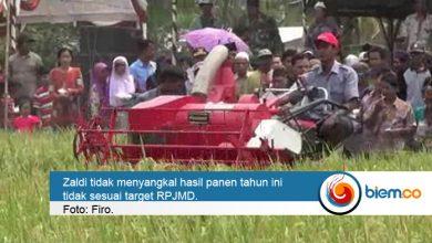 Padi Kabupaten Serang