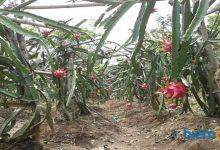 waras farm