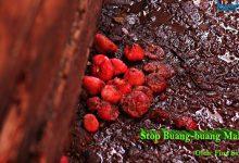 stop buang makanan