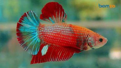 efek narkoba pada ikan