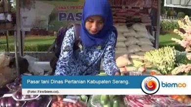 dinas pertanian kabupaten serang