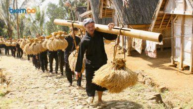 Photo of Hari Krida Pertanian, Memaknai Hasil Kerja Keras Masyarakat Petani