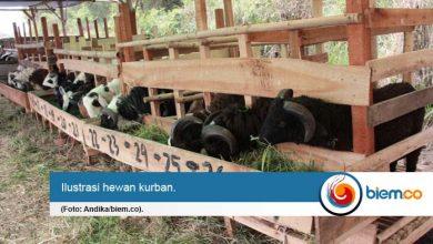 Photo of Antisipasi Covid-19, Penjual Hewan Kurban Diimbau Kedepankan Protokol Kesehatan
