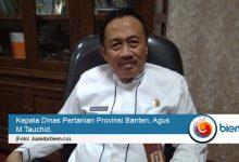 Photo of Hadapi Musim Tanam, Distan Banten Siapkan Bantuan Benih Padi