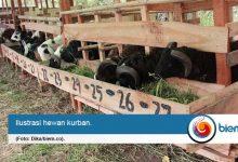 DPKP Kota Serang, pastikan tidak ada penyakit pad hewan kurban