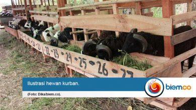 Photo of DPKP Pastikan Tak Ada Penyakit Berbahaya pada Hewan Kurban di Kota Serang