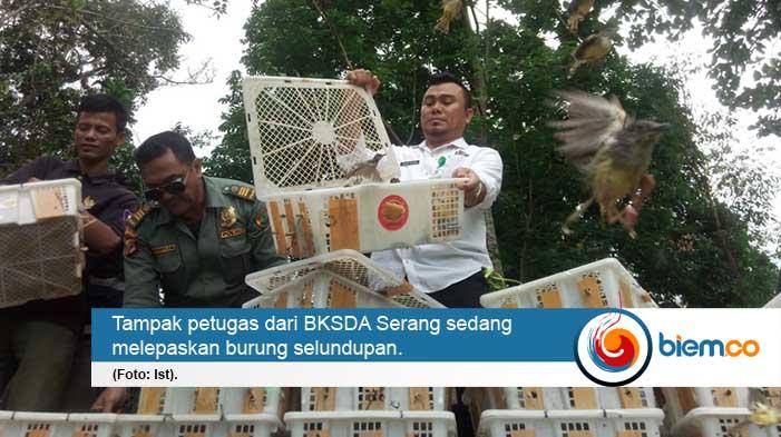1.812 Ekor Burung Selundupan Dilepas Liarkan BKSDA Serang