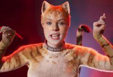 film cats