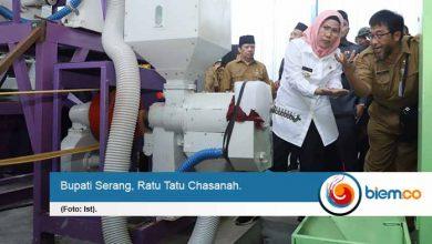 Produksi Pertanian di Kabupaten Serang Surplus, Bupati Kampanyekan Beras Jaseng