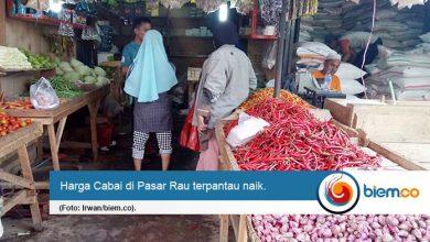 Photo of Awal Tahun 2020, Harga Cabai di Pasar Rau Naik 100 Persen
