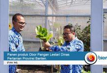 Photo of Distan Ajak Warga Banten Bangun Obor Pangan Lestari