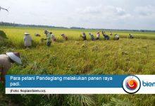 Photo of Panen Raya, Distan Pandeglang Sebut Stok Pangan Masih Aman