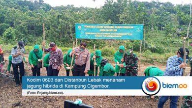 Photo of Kodim 0603 dan Distanbun Lebak Berbondong-bondong Tanam Jagung Hibrida