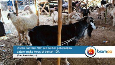 Photo of NTP Peternakan Masih Defisit, Distan Banten: Terapkan Kembali Pola Korporasi