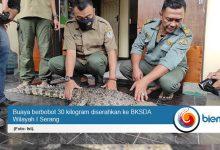Photo of Buaya Berbobot 30 Kilogram Diserahkan ke BKSDA I Serang